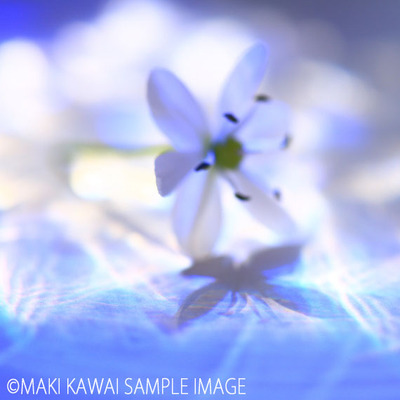 Img_9729kawai