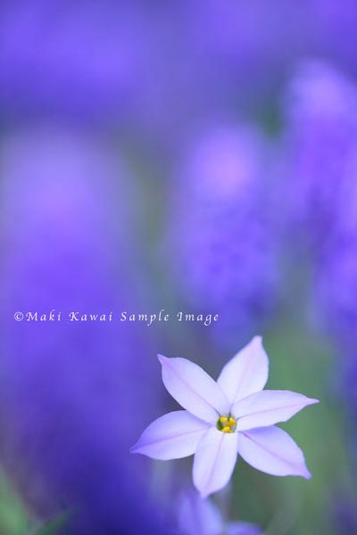 Img_3490kawai