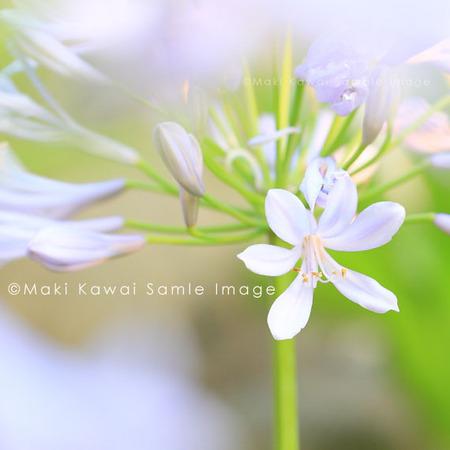 Img_3686kawai