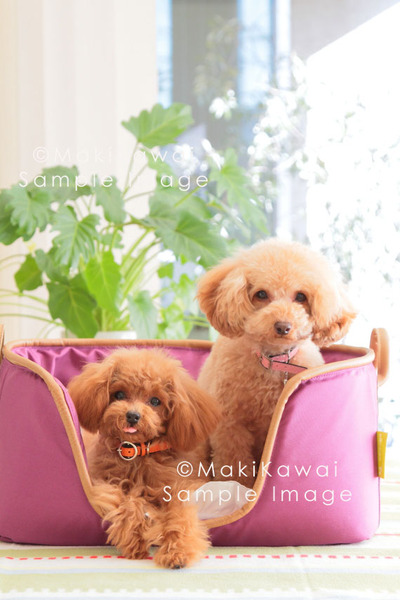 Img_2287kawaikawai