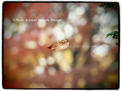 Pc151095kawai_kawai