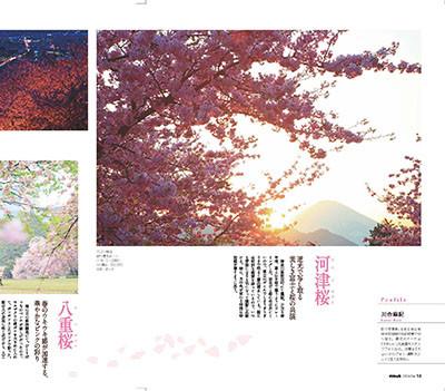 1303_sakura1621sai__3
