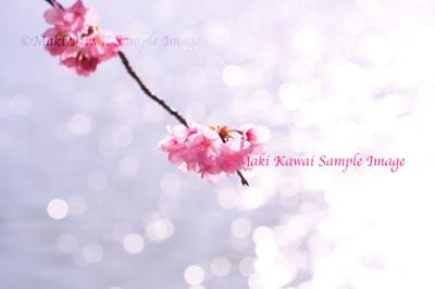 Mk1_1815_kawai