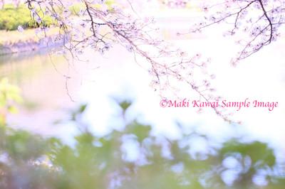Mk1_1889_kawai