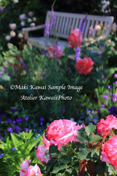 Img_6602kawai