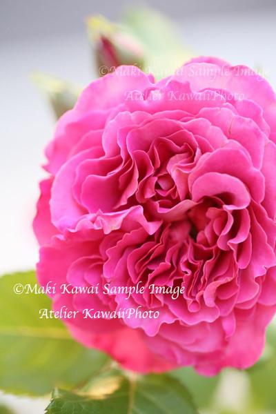 Mk1_9503kawai