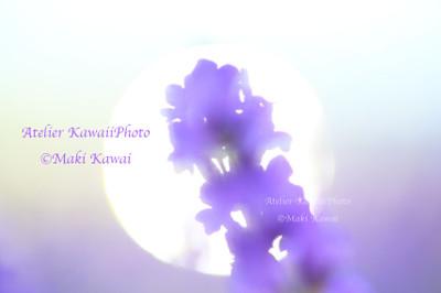 Mk1_5790kawai