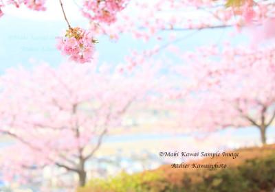Mk1_8601kawai