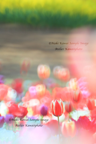 Mk1_4800kawai