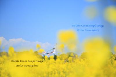 Mk1_4868kawai
