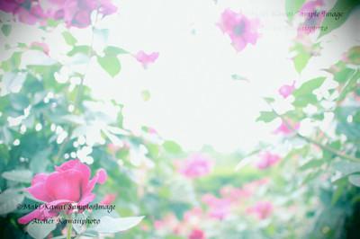 Img_0379kawai