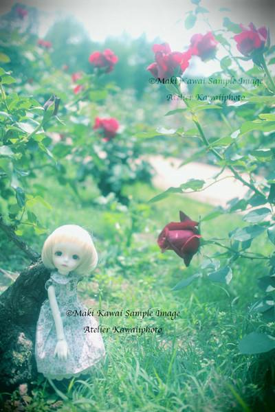 Img_0381kawai