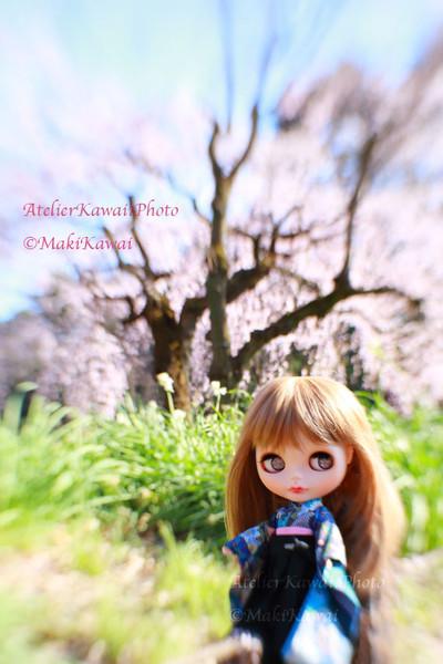 Mk1_8294kawai