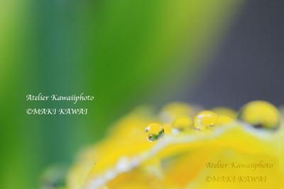 G41a4889kawai