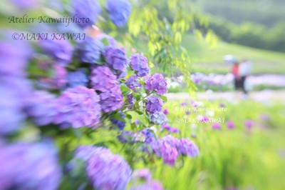 Mk1_0927kawai
