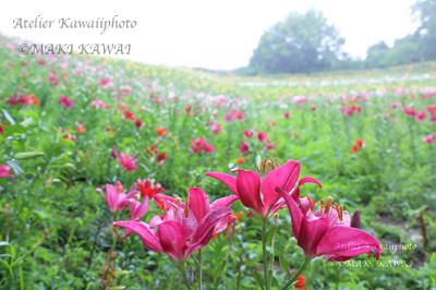Mk1_1001kawai