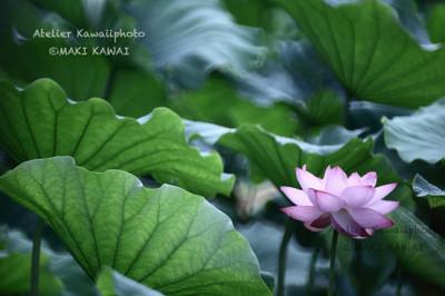 Mk1_9886kawai