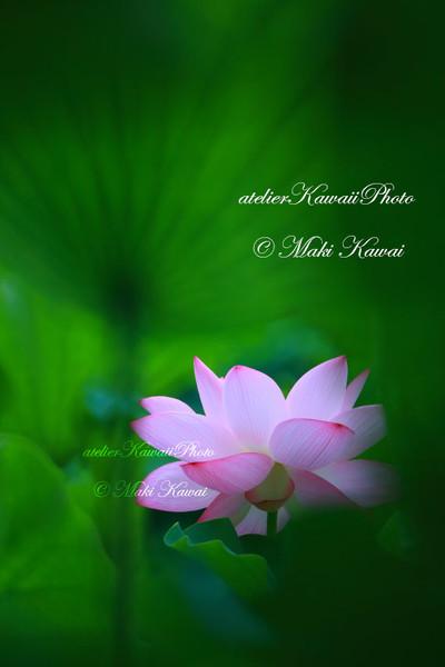 Mk1_0820kawai