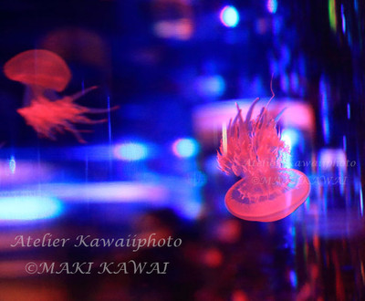 Makikawa2573kawai