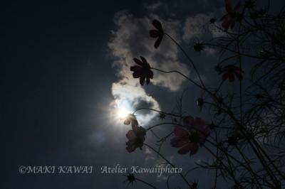 Img_0661kawai