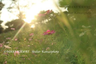 Img_0687kawai