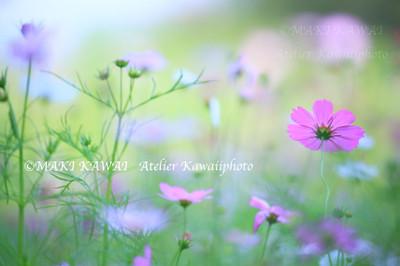 Mk1_3809kawai