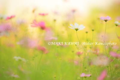 Mk1_3819kawai