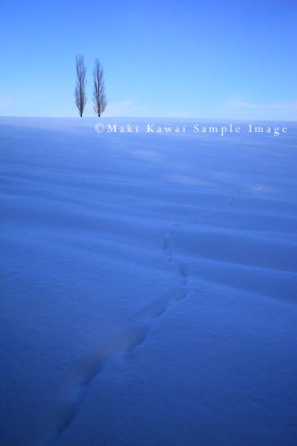 Img_6381kawai
